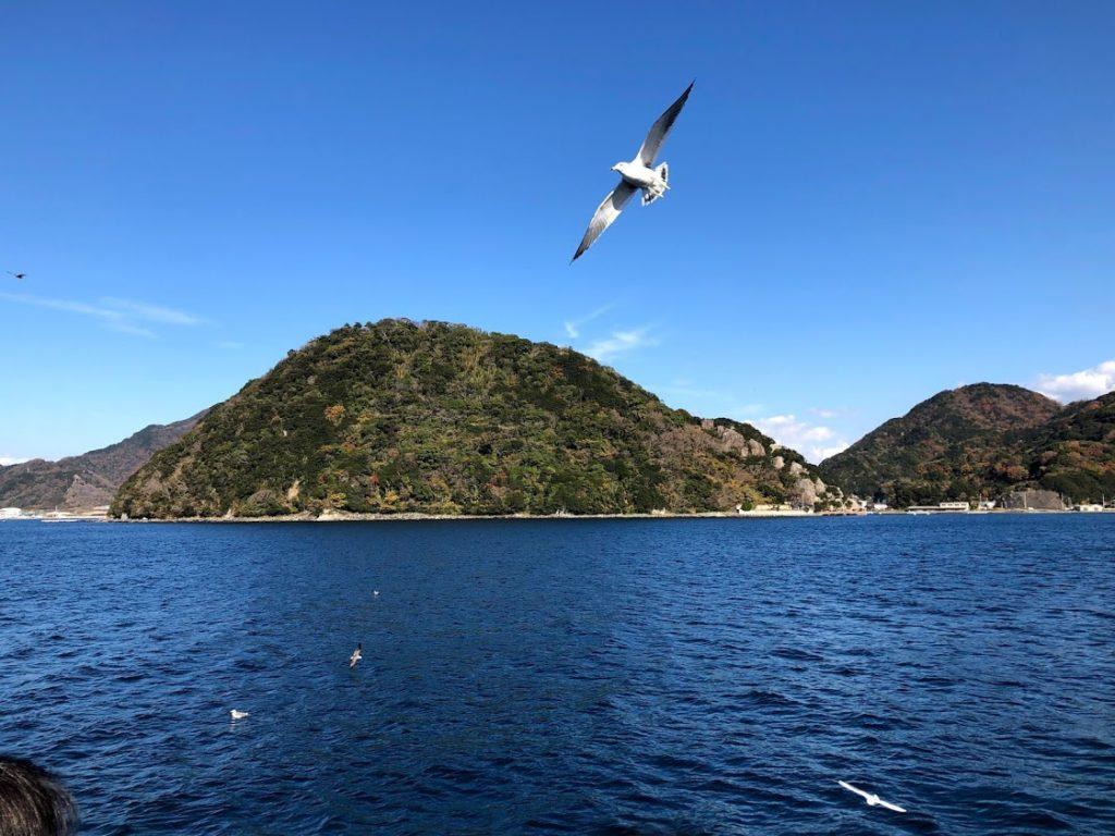 駿河湾クルーズの海とカモメ