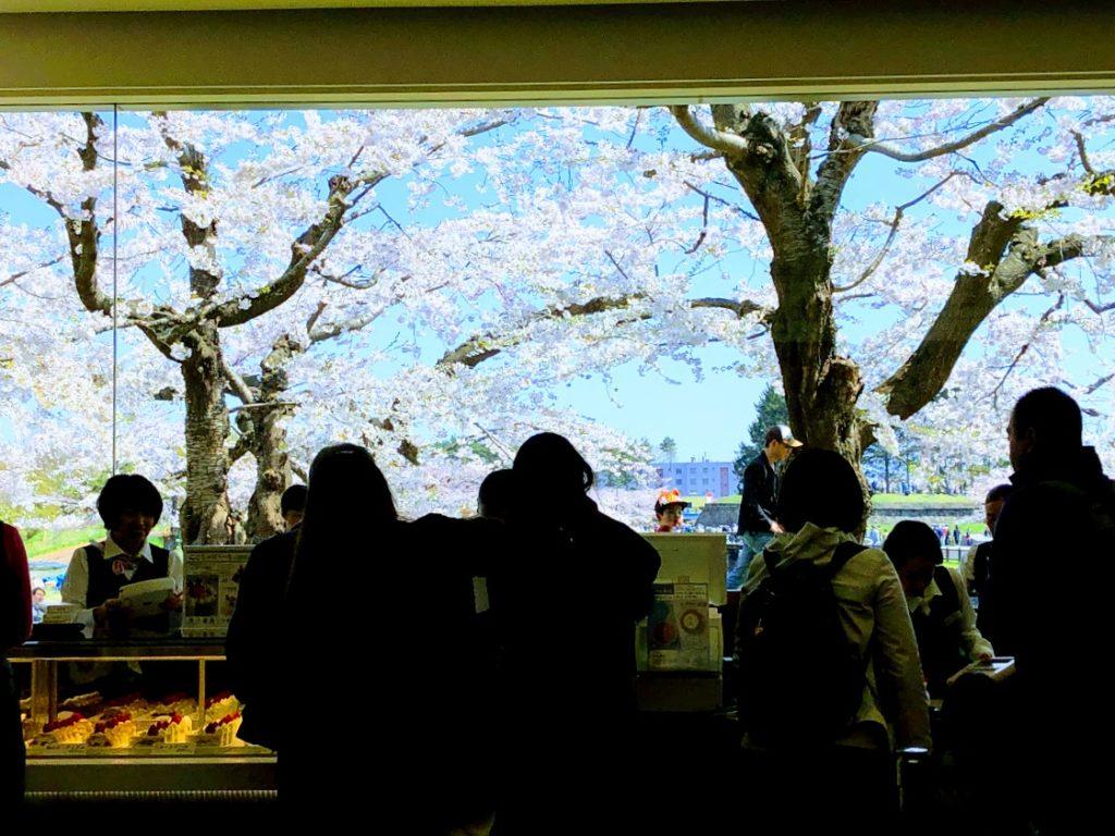 六花亭五稜郭店から眺める桜
